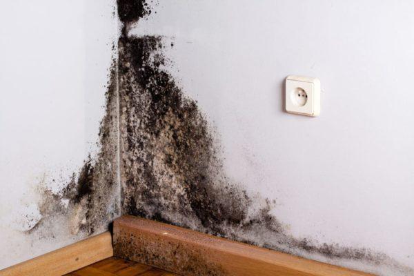 Black mild in the corner of room wall